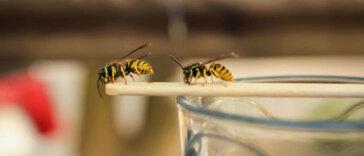 Insecten: gif gebruiken of niet?