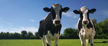 Ziek van veehouderij