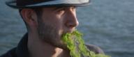 Vijf soorten zeewier en wat je er mee kunt maken