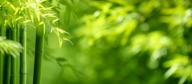 Een lofzang aan bamboe