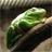Lizard360