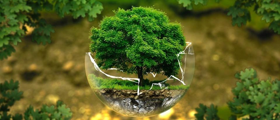 Soyons plus écologiques grâce à des applications mobiles